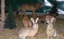 Зайци в музее Фауны
