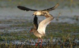 Птицы на озере Крымно