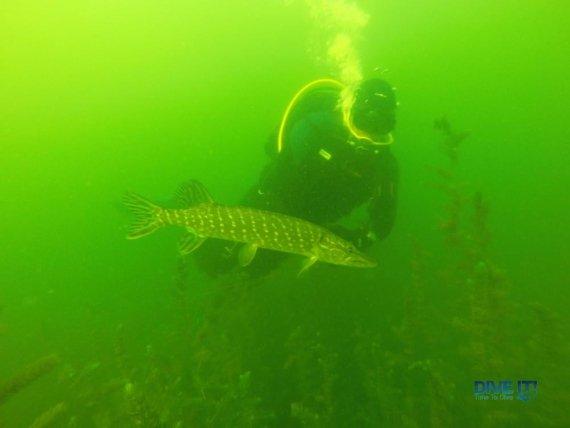 Рыба на Шацких озерах